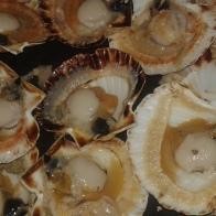 Ouvrir les coquilles avec une lame de couteau d'office , et retirer les noix avec une cuillère à soupe. Open scallops shells with thin and strong blade.
