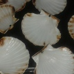 Bien nettoyer 6 parties creuses de coquilles et mettre au four 10 min à 200°. Wash 6 hollow parts of shells, and put in oven for 10 min to 356°F