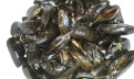 Nettoyer les moules et les rincer sous l'eau froides. Clean molds and rinse them under cold water.